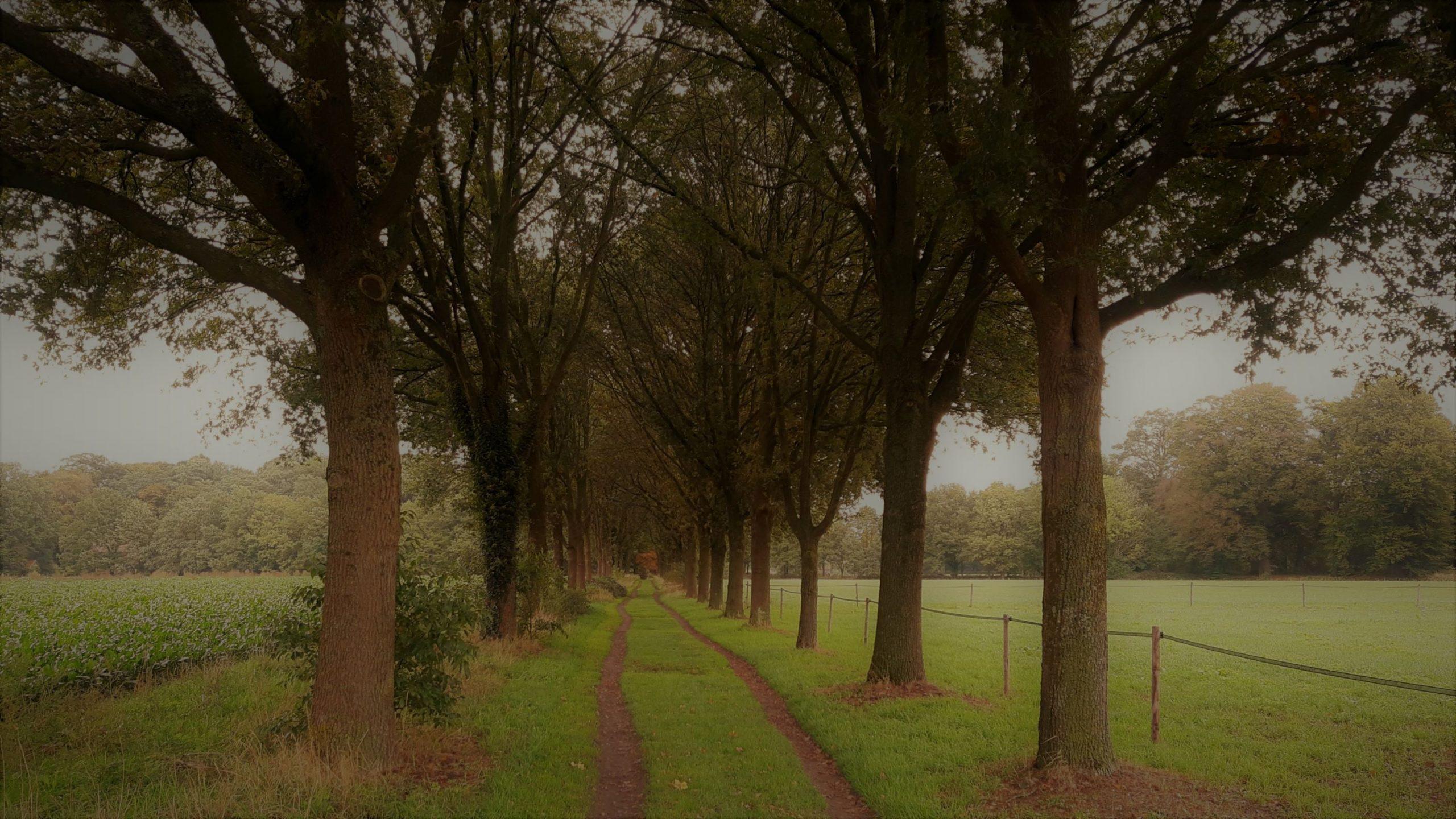 Wat is wandelcoaching? Een pad met bomen tijdens de coaching