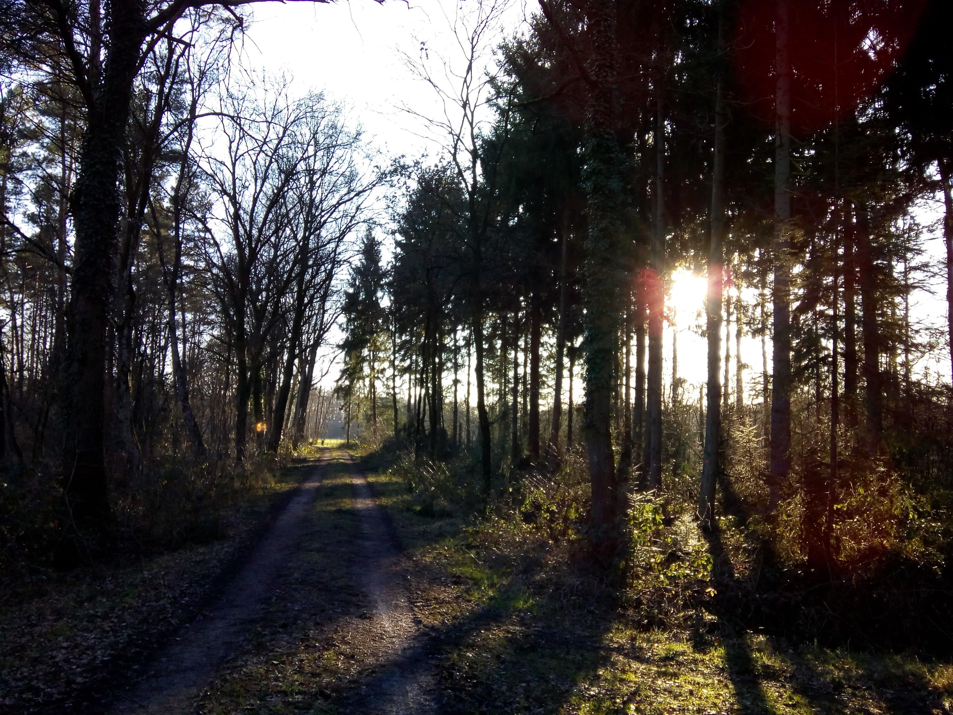 Een bospad bij Ruurlo met lage winterzon die door de bomen schijnt.