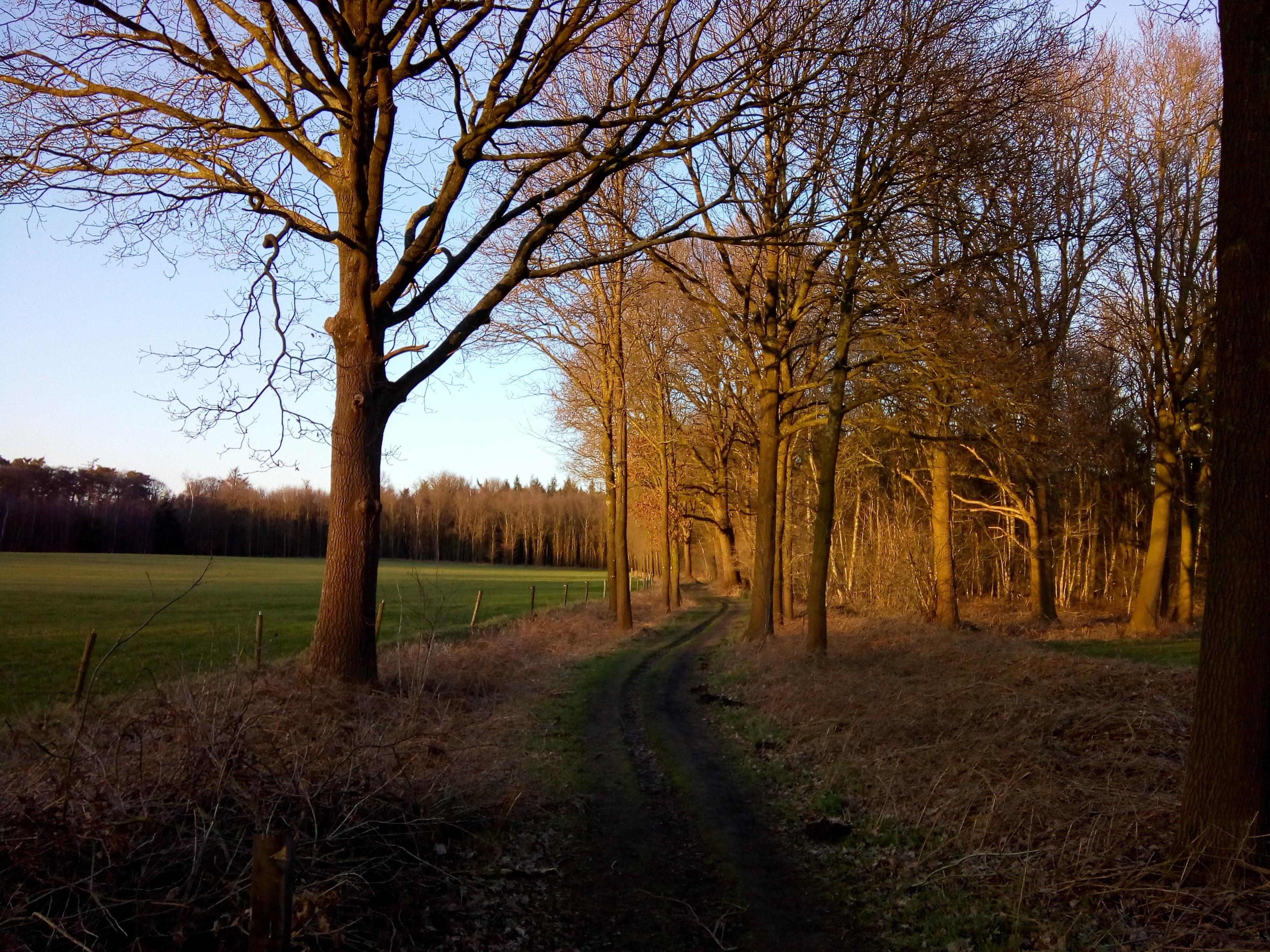 De route bevat leuke bospaadjes, en heeft een aantal mooie vergezichten