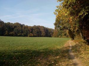 Landschap Ockhorst route Wichmond / Vierakker