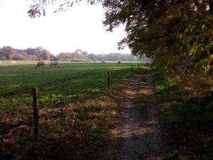 Landschap Ockhorst wandeling Gelderland