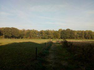 Landschap Ockhorst wandeling Achterhoek