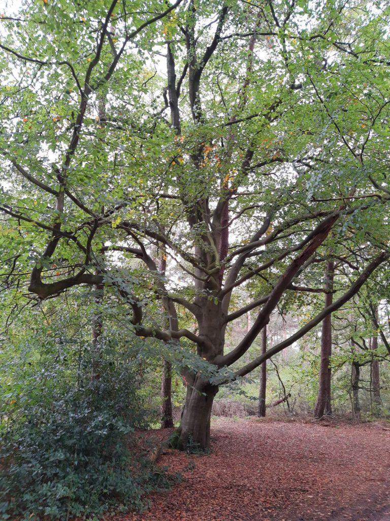 Een mooie boom aan de Möllendiek in Ruurlo