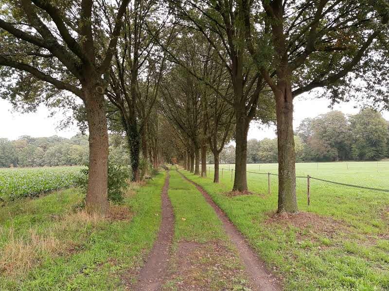 Wandelcoaching in de Achterhoek: Leuk paadje met bomen langs weiland